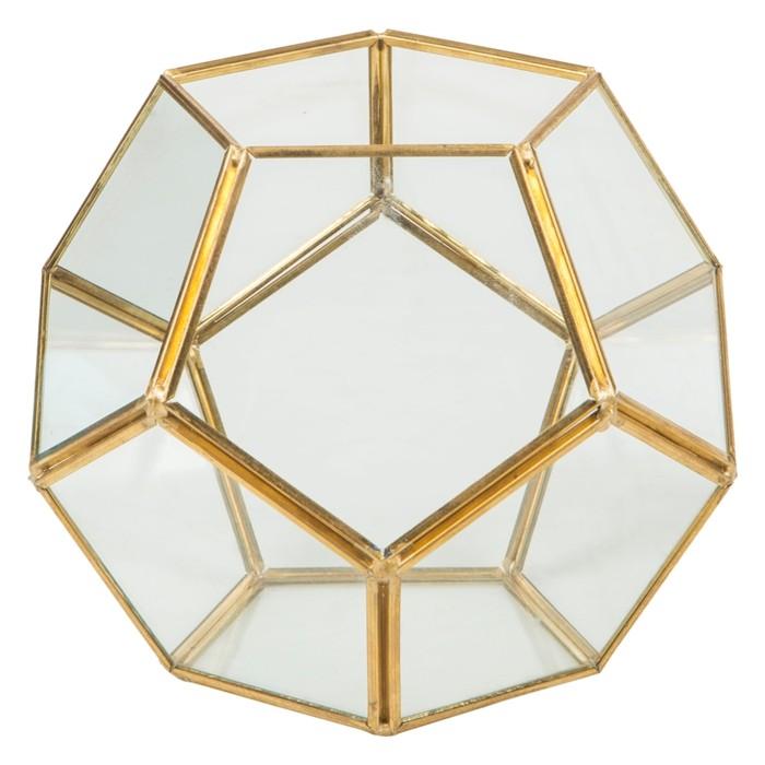 POLYGON TERARYUM FANUS GOLD 13 CM