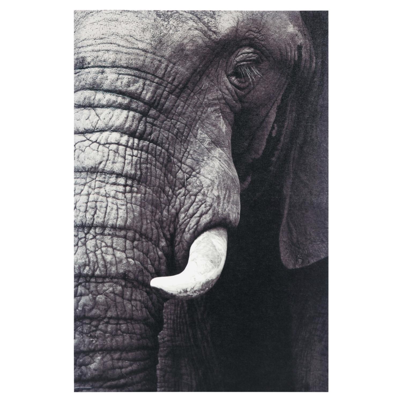 ELEPHANT IN BLACK KANVAS TABLO 60X90CM