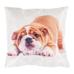 ENGLISH BULLDOG 45x45 CM